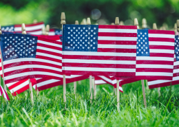 American flags in green grass